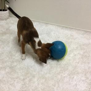 Nina Ottosson koera maiusepall S sinine