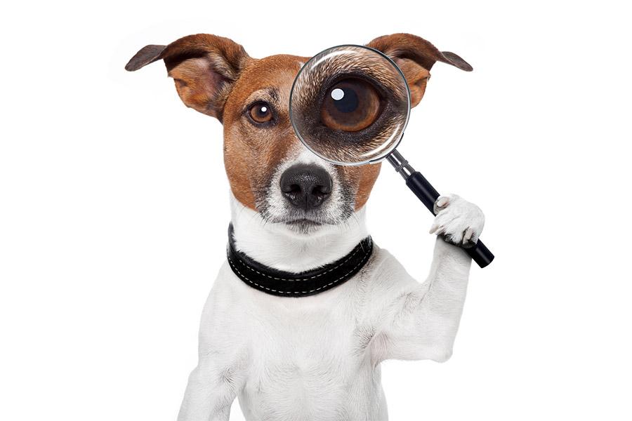 koer kes uurib koeratoidu koostist