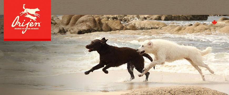 orijen koeratoit